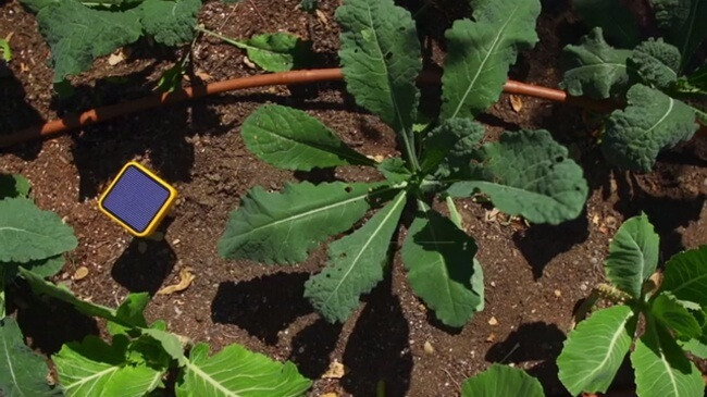 Gardening s a lot of hard work and for many of us with fingers that are less. Edyn Garden Sensor